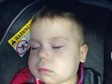 Clio sleeping in the terminal