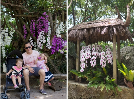 some of the beautiful orchids
