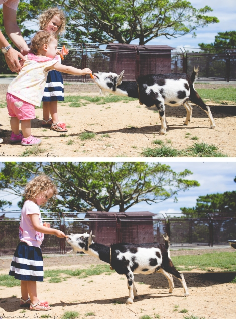 Girls feeding the goats, Eden liked it, Clio liked it UNTIL the goat took the carrot!