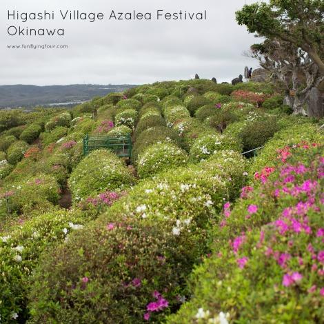 Fun Flying Four Higashi Azalea Festival  (15 of 19)