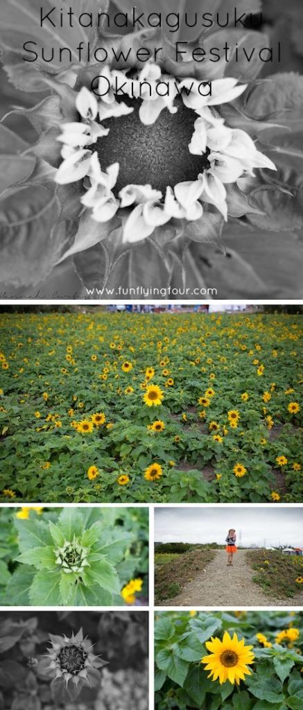 Fun Flying Four Kitanakagusuku Sunflower Festival