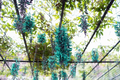 these hanging plant things were really neat and so bright!