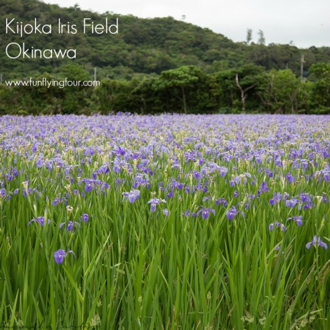 Fun Flying Four Okinawa Iris Field  (6 of 10)