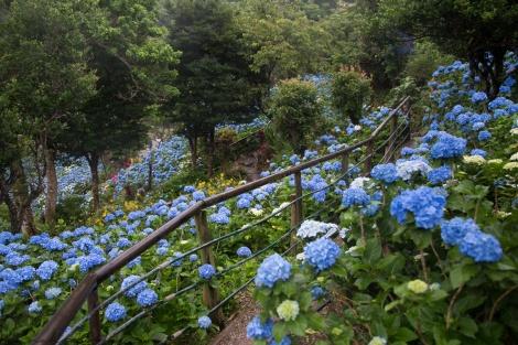 Fun Flying Four Hydrangea Garden (15 of 22)