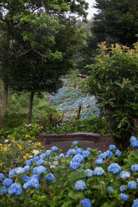 Fun Flying Four Hydrangea Garden (16 of 22)