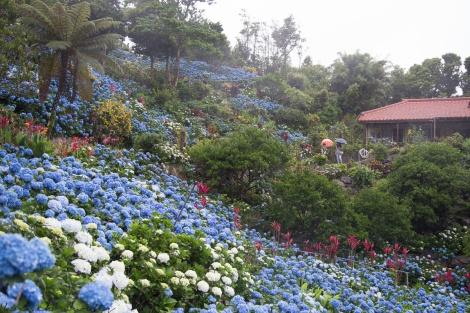 Fun Flying Four Hydrangea Garden (5 of 22)