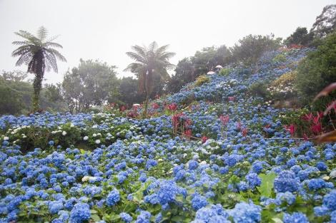 Fun Flying Four Hydrangea Garden (7 of 22)