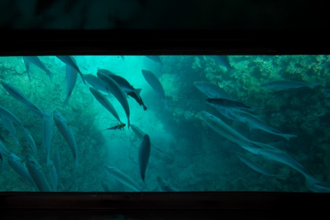 check out all those fish! (looking through the glass-bottom boat)