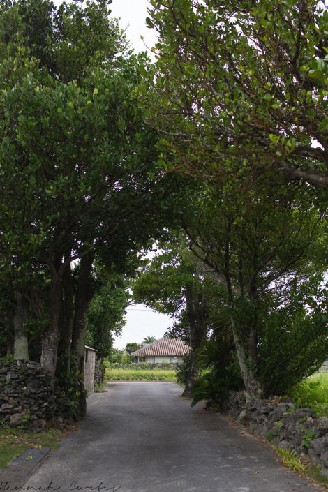 Fukugi Tree of Izena