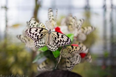 Butterfly Garden Okinawa_-2
