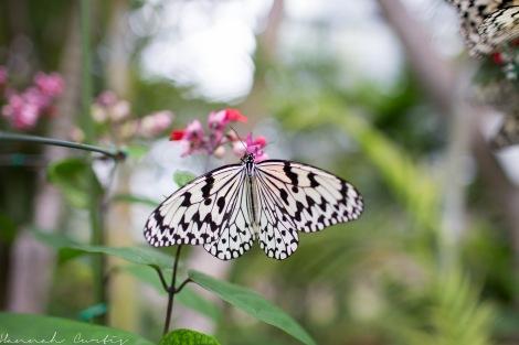 Butterfly Garden Okinawa_-3