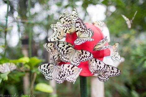 Butterfly Garden Okinawa_-4