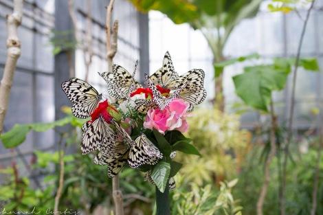 Butterfly Garden Okinawa_