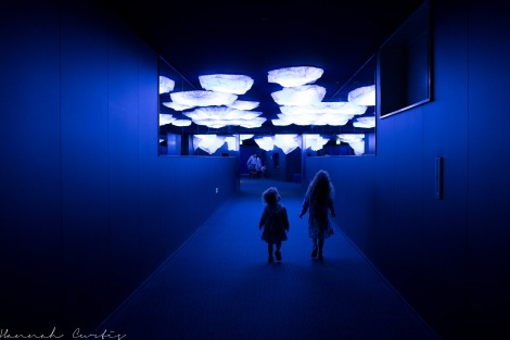 Osaka Aquarium Kaiyukan was really neat, I would definitely recommend if visiting Osaka