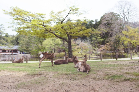 the deer at Nara, while could be aggressive, were a lot of fun!