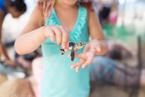 moving recently hatched turtles out of the hot sun until they can be released at sunset